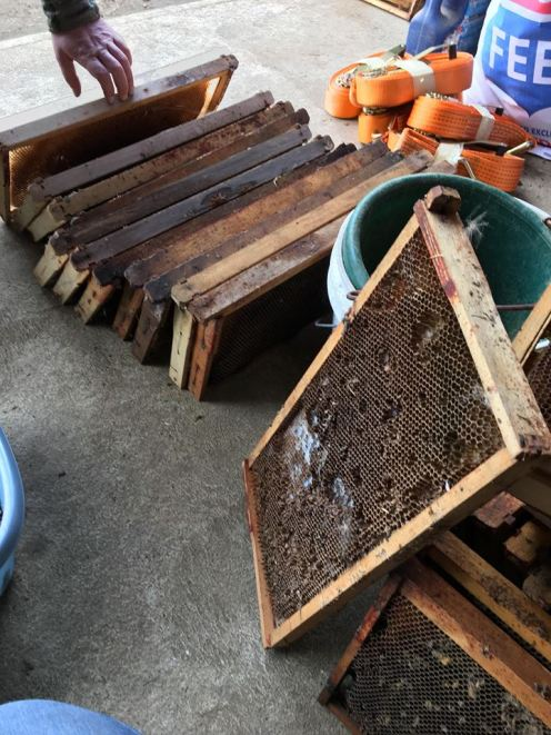 bee frames