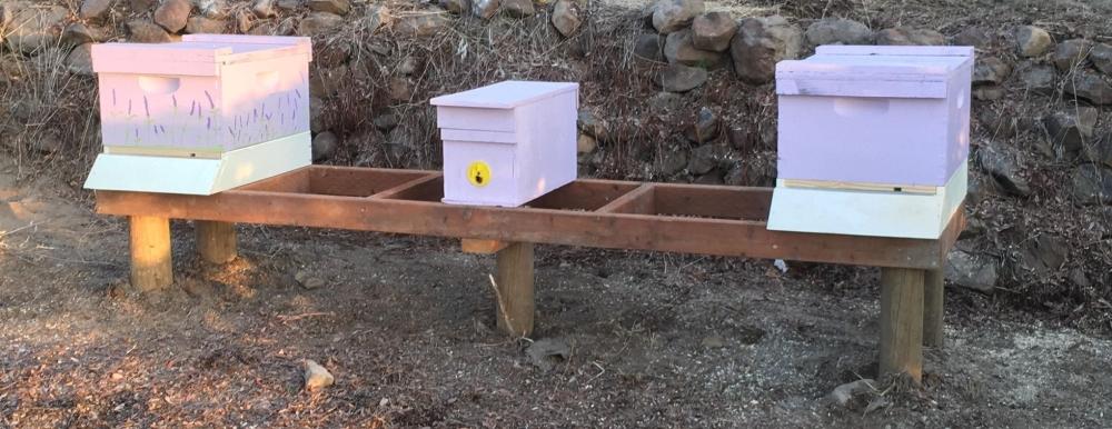 3-bees.jpg