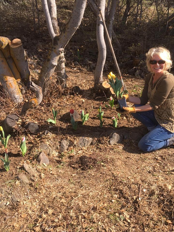 momw tulips