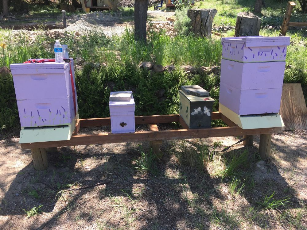 completed nucs